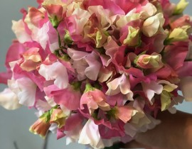 切り花を長く楽しむ方法