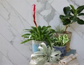 観葉植物 ご紹介