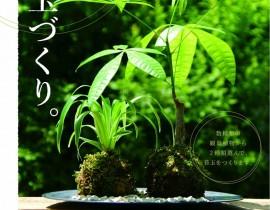 6月ワークショップ【苔玉つくり】