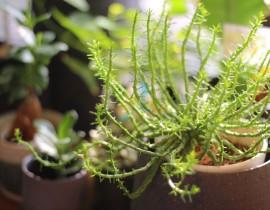 季節に合った気になる植物