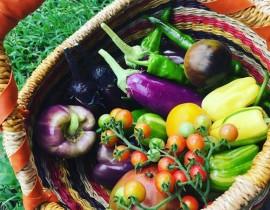 7月 野菜マルシェのお知らせ